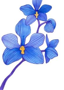 orquideas015